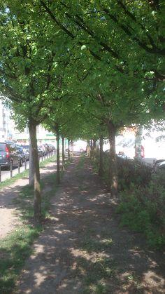 Zielona alejka na pl. Międzymoście, wzdłuż ul. Mostowej | Green avenue at the Międzymoście square, along the Mostowa street