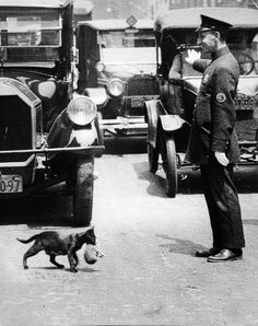 A policeman (1925) stops traffic to allow a mother cat to carry her kittens
