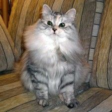 The latest news about Opera web browsers, tech trends, internet tips. Cats, Animals, Gatos, Animais, Animales, Animaux, Animal, Kitty, Cat