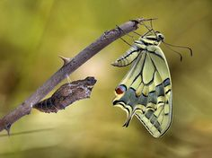 50 fascinantes fotografías en primer plano de mariposas de - Taringa!