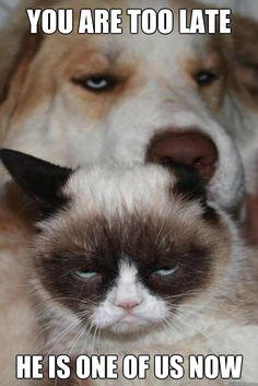 Grumpy cat makes dog grumpy | quickmeme »