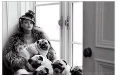 my dream...being covered in valentino and pugs.