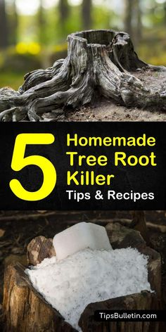 Discover 5 diy homemade solutions as a tree root killer. If you have a tree root problem obstructing your sewer and pipelines you can use these simple common household ingredients like vinegar and Epsom salts to remove stumps and tree roots. Kill Tree Roots, Kill Tree Stump, Tree Stump Killer, Removing Tree Stumps, How To Remove Stumps, Tree Root Removal, Stump Removal, Tree Trunks, Tree Photography