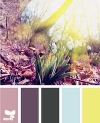 Color palette by design seeds