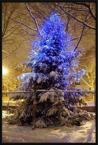 Snowy blue Christmas Tree, St John's College, Oxford