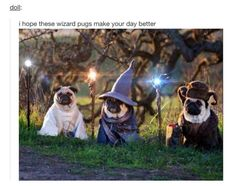 """64 entries are tagged with pug jokes. i love dogs with human names."""" and i turned around to see a pug waddling over. Tauriel, Pug Jokes, Benadryl For Cats, Funny Animals, Cute Animals, Baby Animals, Elfa, Cute Dog Pictures, Pug Life"""