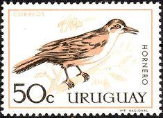 Uruguay 1963 - El Hornero Común