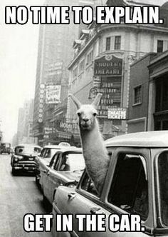 Funny! OMG I so I have friend that lets his Llama ride in the front see of the truck with him lmao!! This is for you Chris!!!