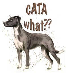Catahoula Leapord Dog...A what? How many time have I heard a what?