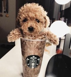72 Funny Fuzzy Animals To Brighten Your Day - Doggo❣ - Perros Graciosos Baby Animals Pictures, Cute Animal Pictures, Animals And Pets, Rare Animals, Animals Images, Wild Animals, Cute Little Animals, Cute Funny Animals, Funny Dogs