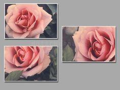 Vintage rose  photography print  natural  rose  von motscherbelle