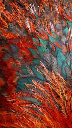 Wallpaper iPhone 5 http://galaxytokok-infinity.hu/ http://iphonetokok-infinity.hu/ orange feathers