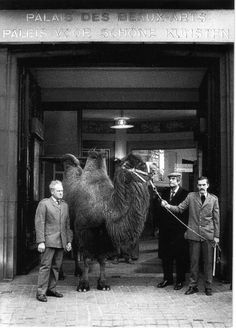 Marcel Broodthaers, (entering the Palais des Beaux Arts Brussels with a camel from the Antwerp Zoo), 1974