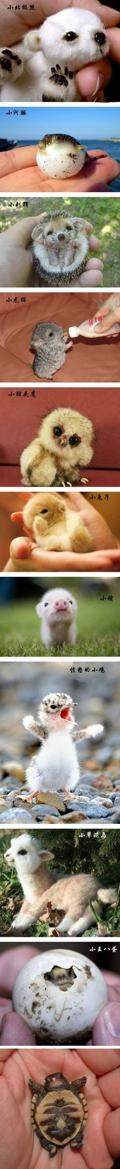 "new born baby animals, if you don't say ""awww"" or smile uncontrollably you're not human."