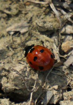 Lady bug!