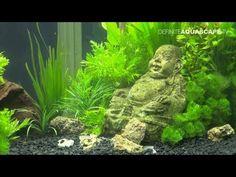 My Zen 7.5 Gallon Planted Betta Tank - YouTube