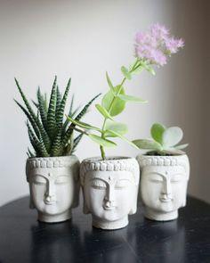 zen succulents Two amazing words synchronized