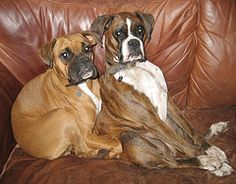 "Just lean in a little bit.  There, that's it!  Say, ""Cheese.""  (boxer)"