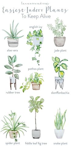 easy houseplants - easy indoor plans - green thumb - pothos plant - aloe vera - rubber tree maintenance - spider plant - fiddle leaf fig tree - snake plant - houseplants for beginners Natural Home Decor, Easy Home Decor, Diy Garden, Home And Garden, Garden Modern, Garden Planters, Garden Hose, Plantas Indoor, Fiddle Leaf Fig Tree
