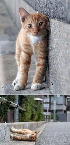 Perspective Cat