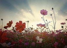 Sky of flowers!