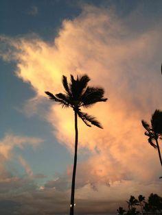 Sunset Palm Tree at Four Seasons Maui