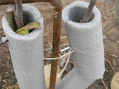 Как укрыть яблони в зиму