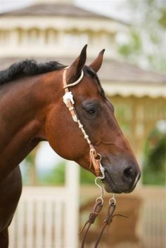 Selenium: How much is in your horse's diet? - by Kentucky Performance Products, LLC #horses