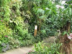 La collection de plantes, souvent rares, est un élément majeur de l'ambiance du lieu.