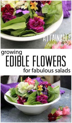 Edible Gardening When it comes to fresh salad ingredients, there are none prettier than edible flowers. Forage right in your backyard for fresh flowers. Edible Plants, Edible Garden, Edible Flowers, Growing Flowers, Fresh Flowers, Growing Herbs, Spring Flowers, Wild Flowers, Edible Lavender