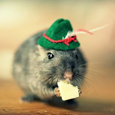 Refrigerator Magnet Gerbil Wearing A Green Hat by gerbilsinhats, $1.00