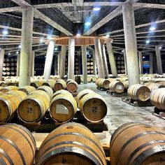 Design and wine, in Rioja of course. www.winetastelovers.com customize your winetours. Viña Real winery #turismo #turism #enoturismo #experience #winetours #winetastelovers #winelover #Rioja #gf_spain #gf_daily #gastronomía #gang_family #LaRioja #Spain #vino #viaje #travel #tapas #instawine #gastronomy #viajar #instapic #photooftheday #instagood #greatesttravels #igers #picoftheday