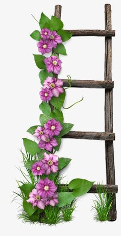 Wooden ladder PNG and Clipart Flower Frame, Flower Art, Cactus Flower, Image Clipart, Diy And Crafts, Paper Crafts, Art Carte, Wooden Ladder, Wooden Stairs
