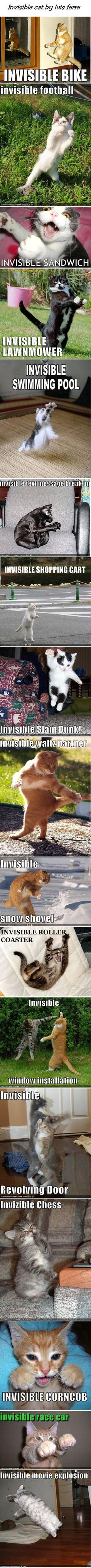 Invisible lol cat. Inivisible sandwich. Invisible snow shovel. Invisible explosion