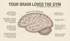 your brain after exercise | ... brain of someone sitting and the brain after a 20 minute walk