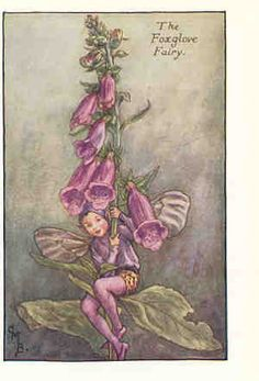 """The Song of the Foxglove Fairy   """"Foxglove, Foxglove,  What do you see?""""  The cool green woodland,  The fat velvet bee;  Hey, Mr bumble  I've got honey here for thee!    """"Foxglove, Foxglove,  What do you see now?""""  The soft summer moonlight  On bracken, grass, and bought;  And all the little fairies dancing  As only they know how."""