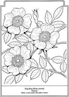 Welcome to Dover Publications - The Language of Flowers Coloring Book: