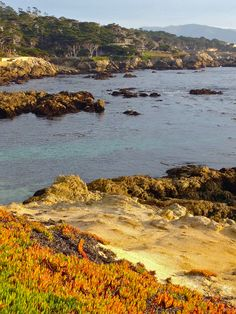 17mile Drive Monterey Bay...So fortunate to have lived down the road a piece :)