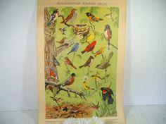 Antique Poster Pennsylvania Summer Birds Litho by Jacob Bates