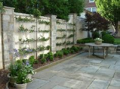 render fence, build columns to strenghten and espalier espalier framework | ... of the different styles of espalier. I would love to frame these