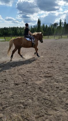 Suomenhevonen, riding, finnhorse