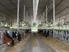 Mercado de Terras«Fazendas a Venda«Página 1
