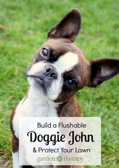Build a Doggie John Dog Run and Save your Lawn from Damage - If you want to protect your lawn from doggie business so it stays pretty and usable, it is incredibly easy to teach the mutts to use a dog run. With some training consistency, lots of liver treats, and your dog's desire to keep you happy, you can say goodbye to dog poop for ever (on you lawn at least).