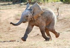 It may not be fuzzy but he sure looks like he's enjoying himself. I hear baby elephants are like 300lb puppies.