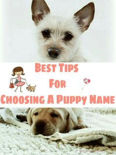 Need help picking out a name for your new puppy or dog? Here's a list of tips to help you!