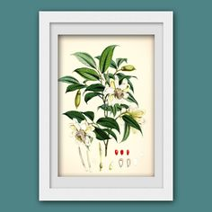 Vintage Print 95, vintage botanical illustration