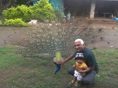 Peacock is going to dance in rainy season to watch clouds http://www.newdelhitimes.com/archive-site-map/ Latest media is an important in life to know news like times of India latest cricket breaking news recent India politics current news of India that is produced by new Delhi times.