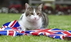 Larry the Downing Street cat sits with Diamond Jubilee bunting in the garden of number 10 Downing Street in London.