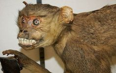 Top 46 des photos d'animaux empaillés ratés, ou les misères de la taxidermie