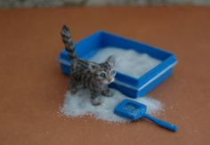 OOAK Realistic Handmade ~ Kitten ~ Miniature Dollhouse 1:12 Sculpture by Reve